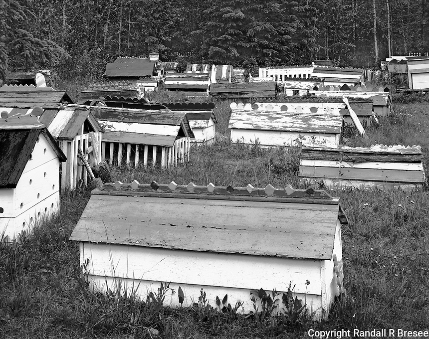 """""""Spirit Houses Shelter the Dead"""" <br /> Eklutna Village, Alaska<br /> <br /> The Dena'ina Athabascan Indian settlement at Eklutna Village has been inhabited for centuries. The Dena'ina cremated their dead and placed the ashes in baskets to free the spirits for their final journey. After Russian Orthodox missionaries arrived in the early 1700's, the Dena'ina converted to Russian Orthodoxy and began burying their dead and placing brightly painted """"spirit houses"""" over the graves to shelter the spirits until they made their final journey. This photo shows spirit houses in the graveyard of St. Nicholas Orthodox Church in Eklutna Village, a short distance northeast of Anchorage, Alaska."""