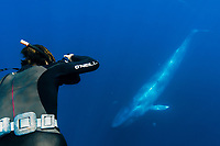 blue whale, Balaenoptera musculus, and photographer, San Diego, California, USA, Pacific Ocean