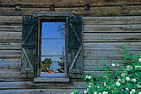 Composition of historic Fraser log cabin window reflecting barns with flower blossoms at Kelsey Creek Farm Park, Bellevue, Washington. Fraser cabin was built in 1888.