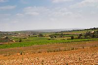 Domaine Peyre Rose, St Pargoire. Gres de Montpellier. Languedoc. France. Europe. Vineyard.