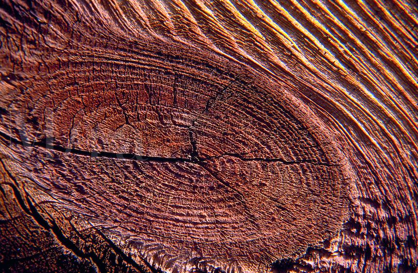 Super close up of tree bark.