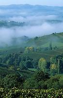 Europe/France/Rhône-Alpes/69/Rhône/Env Oingt: Vignoble du Beaujolais