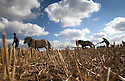 05/10/16 <br /> <br /> Gordon McKay is led by his Norwegian Fjord horses, Thor and Lofty. <br /> <br /> Heavy horses compete to plough the straightest furrows at the 111th Brailsford Ploughing Match, near Ashbourne in the Derbyshire Dales.<br /> <br /> All Rights Reserved: F Stop Press Ltd. +44(0)1773 550665   www.fstoppress.com