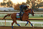 Red King, trained by trainer Philip D'Amato, exercises in preparation for the Breeders' Cup Turf at Keeneland Racetrack in Lexington, Kentucky on October 31, 2020.