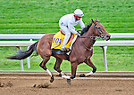 October 26, 2015 :  Beholder, trained by Richard E. Mandella and owned by B. Wayne Hughes, exercises in preparation for the Breeders' Cup Classic at Keeneland Race Track in Lexington, Kentucky on October 26, 2015. Scott Serio/ESW/CSM