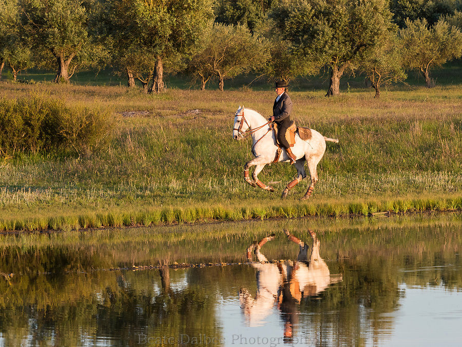 rider reflecting in a pond at Monte Barrao studfarm