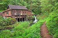 Cedar Creek Grist Mill in spring with path. Woodland, Washington