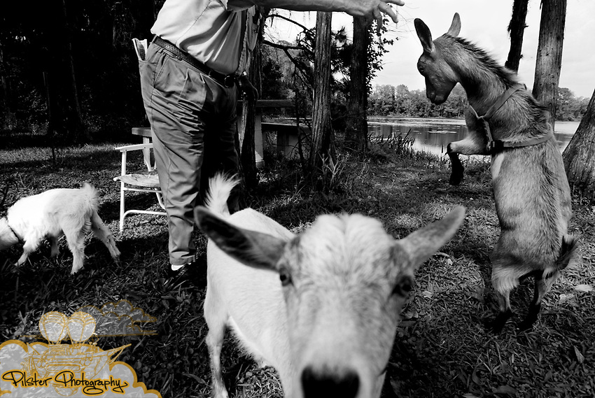 John Lang, of DeLand, dances with his goat Amber while Miracle, left, and Sassy play around and graze Wednesday, March 27, 2003, at Cypress Lake Park in DeLand. (Chad Pilster).**TO GO WITH STORY/EXTENDED CAPTION INFO BY PILSTER**