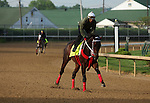 LOUISVILLE, KY - APRIL 25: Majesto (Tiznow x Unacloud, by Unaccounted For) gallops  at Churchill Downs, Louisville, KY, with Japanese contender Lani in the background. Owner Grupo 7C Racing Stable, trainer Gustavo Delgado. (Photo by Mary M. Meek/Eclipse Sportswire/Getty Images)