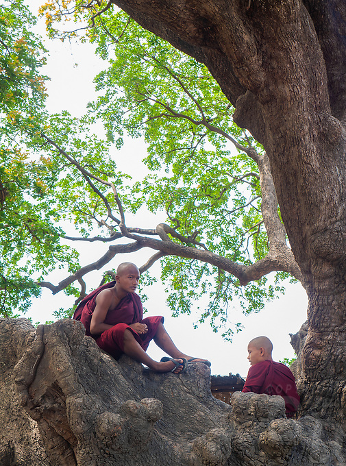 Production and dyeing of Silk and Cotton in Mandalay the traditional way. Myanmar Buddhist Monks resting in a large tree, Mandalay, Myanmar