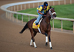 Optimizer , trained by D Wayne Lukas and to be ridden by Jon Court, works out in preparation for the 138th Kentucky Derby at Churchill Downs in Louisville, Kentucky on May 3, 2012