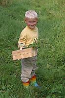 Junge, Kind erntet Brennnesseln für Kräutersuppe, Brennessel, Brennnessel, Brenn-Nessel, Urtica dioica, Stinging Nettle, Ortie