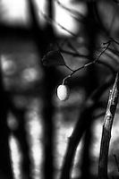 Huntington Gardens, California (Black & White)