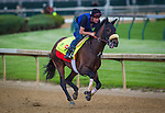LOUISVILLE, KY - MAY 04: Trojan Nation gallops in preparation for the Kentucky Derby at Churchill Downs on May 04, 2016 in Louisville, Kentucky. (Photo by Zoe Metz/Eclipse Sportswire/Getty Images)