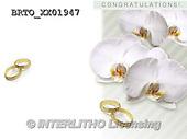 Alfredo, WEDDING, HOCHZEIT, BODA, photos+++++,BRTOXX01947,#W#