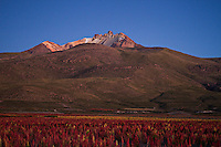 A picture dated March 31, 2013 shows Thunupa and a plantation of quinoa in the region of the Uyuni Salt Flats, Jirira, in Oruro, Bolivia.  2013  was declared the international year of Quinoa by the UN.  Bolivia is the main producer of quinoa in the world.