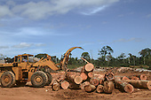Para State, Brazil. A Clark bulldozer piling up tree trunks in a sawmill timber yard. Most timber in Para is illegally felled in indigenous reserves.