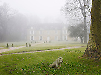 The stone statue of a forlorn dog stands on the lawns leading up to fashion designer Gerard Tremolet's chateau