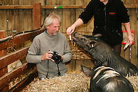 John Daniels, animal photographer, working with pigs, Fishers Farm Park, Wisborough Green, West Sussex