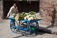 India, Dehradun.  Vegetable Salesman Pushing his Cart  in Moronwala Village, a suburb of Dehradun.