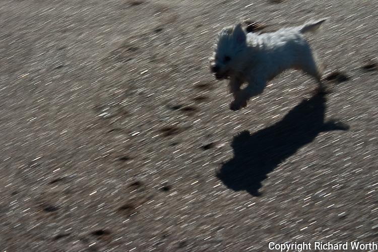 On the beach, chasing a ball - if you're a dog, it just doesn't get any better.