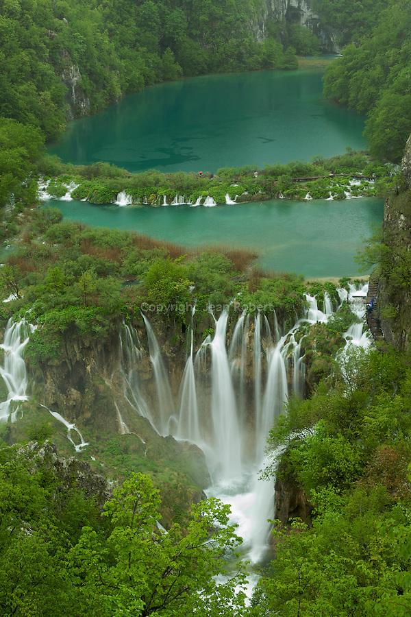 parc national des lacs de Plitvice..Vue plongeante sur les lacs Kaluderovac et Nvakovic Brod .Seize lacs aux incroyables eaux cobalt sont reliés en gradins par une multitude de cascades et de chutes tumultueuses. Le tout serti dans un écrin dhêtres, de charmes, de sapins blancs et dépicéas. Cette merveille de la nature classée au patrimoine mondial de lUnesco depuis 1979 est due à la sédimentation du carbonate de calcium présent en grande quantité dans leau. ..View on the  Kaluderovac and Nvakovic Brod lakes. Plitvice Lakes national park is the largest of Croatia's eight national parks and is invluded in the Unesco list since 1979. 16 lakes and hundred of cascades are hidden in a splendid forest. This nature gem has been created by a phenomenon of karst hydrography