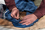 New Hampshire Fish and Game biological technician cconducts a physical exam of a trapped New England cottontail rabbit inside the Great Bay National Wildlife Refuge.