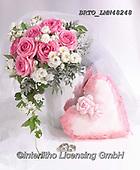 Alfredo, FLOWERS, BLUMEN, FLORES, photos+++++,BRTOLMN48248,#f#, EVERYDAY