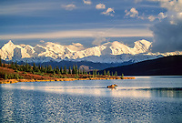 Cow moose wades in the blue waters of Wonder Lake, mount Brooks and the Alaska Range in the distance.