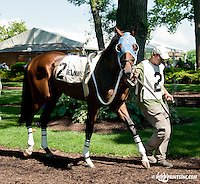 Hard to Name before The Oh Say Stakes at Delaware Park on 6/29/13