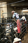 January 2009: Bullrider Travis Sellers getting ready to ride White Chocolate at the CBR World Championships in Las Vegas.