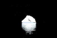 A seabird flies out of a sea cave at Kalalau Beach, Kaua'i.