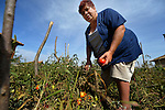 Gulten Murat harvests tomatoes in her garden for use in a feeding program sonsored by the United Methodist congregation in a largely Roma, Turkish-speaking neighborhood of Dobrich, in the northeast of Bulgaria.