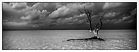 Iles Bahamas /Ile d'Eleuthera/Harbour Island/Dunmore Town : la plage et Fashion Tree - arbre mort célébré par de nombreux photographes de mode // Bahamas Islands / Eleuthera Island / Harbor Island / Dunmore Town: Beach and Fashion Tree - Dead Tree Celebrated by Many Fashion Photographers