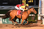 February 13, 2021: Clairiere wins Rachel Alexandra Stakes Day at Fair Grounds Race Course in New Orleans, Louisiana. Parker Waters/Eclipse Sportswire/CSM