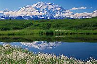 Cotton grass, tundra pond<br />   and Mt. McKinley<br /> Alaskan Range<br /> Denali National Park, Alaska