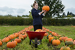 Pictured: Maddie Philips, 18, preparing today for the opening of the pumpkin farm at Sunnyfields Farm, which will take place this Saturday.<br /> <br /> The farm in Totton, near Southampton, Hants, has currently brought in 15,000 pumpkins from the fields but that number will be increased to 40,000 before the end of the week. Although restrictions will be in place, with people only being able to book specific 30 minute time slots to attend, they can still expect a variety of different pumpkin based attractions. They will even be able to come and choose their own pumpkin to take home.<br /> <br /> © Ewan Galvin/Solent News & Photo Agency<br /> UK +44 (0) 2380 458800