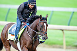 LOUISVILLE, KY - MAY 04: Brody's Cause, trained by Dale Romans and owned by Albaugh Family Stable, exercises and prepares during morning workouts for the Kentucky Derby and Kentucky Oaks at Churchill Downs on May 4, 2016 in Louisville, Kentucky. (Photo by John Voorhees/Eclipse Sportswire/Getty Images)