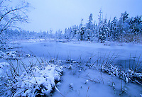 Snow covered Hummocks and winter stream, Pine Barrens, New Jersey
