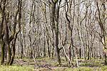 Foto: VidiPhoto<br /> <br /> LOENEN – Bos en hei op de Loenermark bij Loenen. Het Veluwse natuurgebied heeft net als de rest van de Veluwe veel last van verzuring en vermesting, veroorzaakt door een teveel aan stikstofneerslag. Gevolg is dat planten afsterven, insecten verdwijnen en eikenbomen dood gaan. Op een aantal plekken op de Veluwe is 90 procent van de eiken al afgestorven.<br /> Foto: Dode eiken.