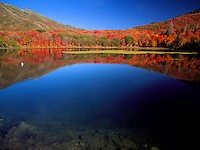 Art in Nature 9409-0666 - An inland seagull enjoys the tranquil beauty of autumn on Maple Lake in Payson Canyon. Vivid color contrast between fall foliage covering hills and deep blue sky reflected on the water. Wasatch Range, Rocky Mountains, Utah.