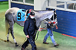 February 28, 2021: Dutch Treat #9 , ridden by Elvin Gonzalez in the Downthedustyroad Breeders Stakes for trainer Randy L. Morse at Oaklawn Park in Hot Springs,  Arkansas.  Ted McClenning/Eclipse Sportswire/CSM