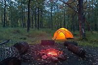 Tent camp, Brooks campground, Katmai National Park, Alaska.