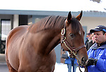 17 January 2010.   Kentucky Stallion Farms.  Hard Spun is shown during a stallion show at Darley @ Jonabell.