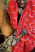 Lolgorian, Kenya. Siria Maasai man showing the hoof of a cow with foot and mouth disease symptoms of discolouration.