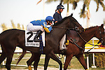 Lady Banks and jockey Joe Rocco Jr on post parade for the Davona Dale at  Gulfstream Park. Hallandale Beach Florida. 02-23-2013