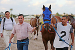 HALLANDALE BEACH, FL - MARCH 04:  Gunnevera (KY) heads to the walking ring for the $400,000 Xpressbet Fountain Of Youth Stakes (Grade II) at Gulfstream Park on March 04, 2017 in Hallandale Beach, Florida. (Photo by Liz Lamont/Eclipse Sportswire/Getty Images)