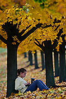 Young girl, 12-14, works on her computer while leaning against a maple tree with its leaves turned golden in the fall.