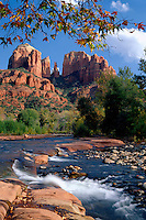 Arizona sycamore, Oak Creek and Cathedral Rocks<br />   near Red Rock Crossing<br /> Coconino National Forest<br /> Colorado Plateau,  Arizona