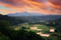 Taro fields. Kauai, Hawaii